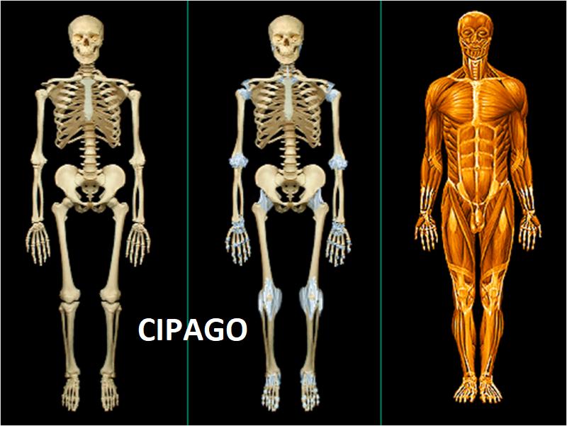 2004 – Maîtrise occluso-ostéopathique des dysfonctionnements de l'appareil manducateur